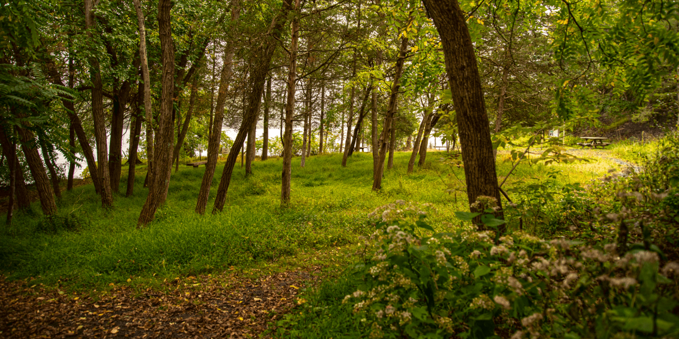 Four-Mile Point Preserve