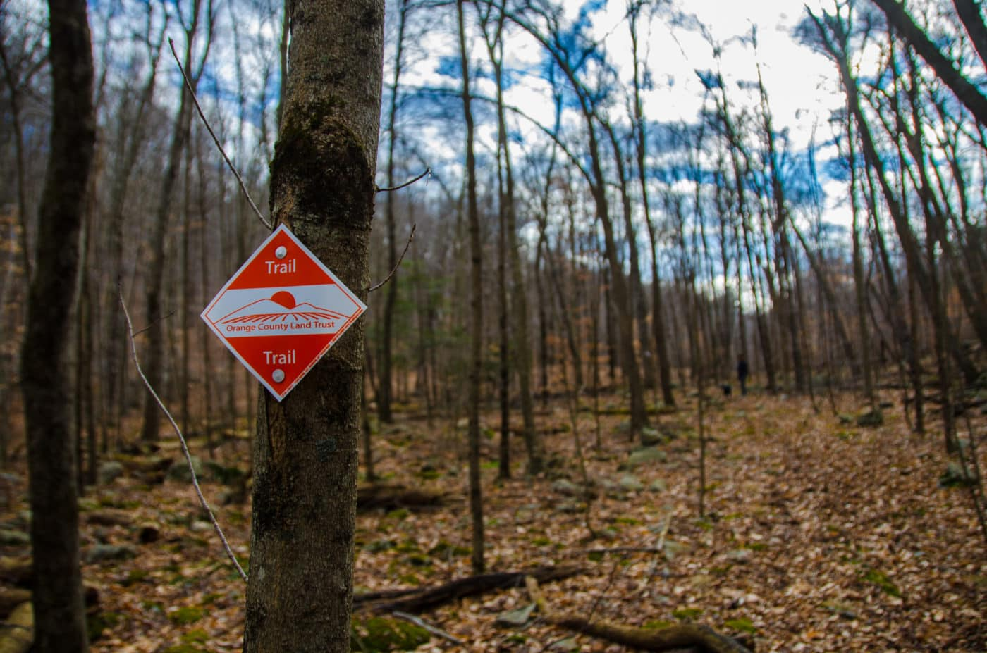 Fuller Mountain Preserve