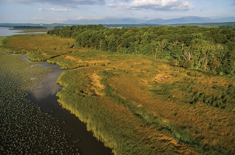 Ramshorn Marsh from the air