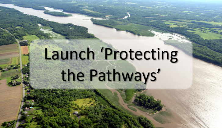 Launch Protecting the Pathways