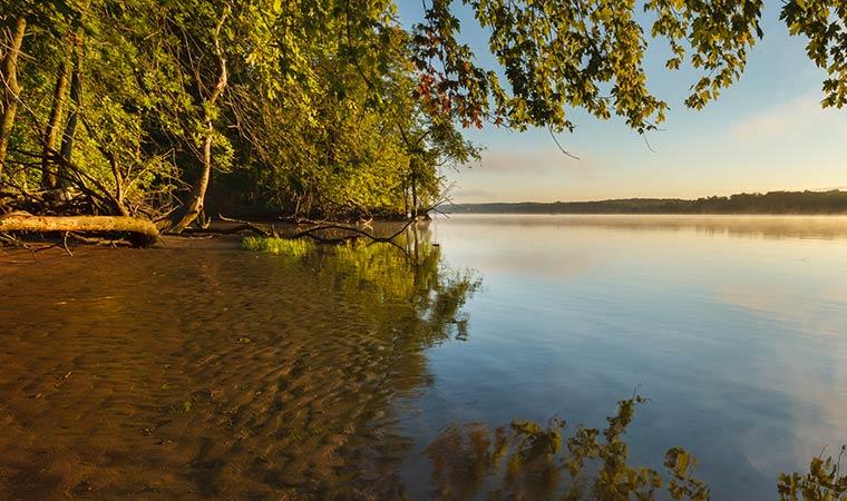 Bronck Island Shoreline