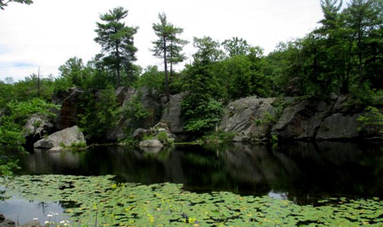 Pond at John Burroughs Sanctuary