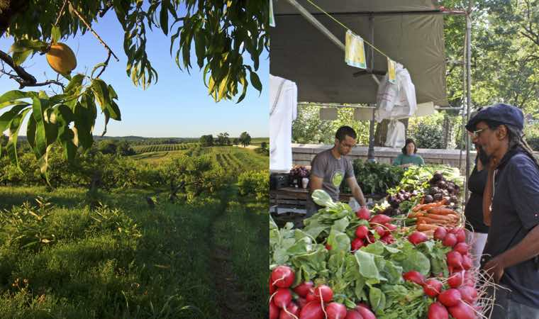 Hudson Valley Produce Supplies Food to our Region