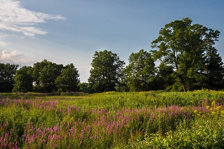 Conserved Landscape