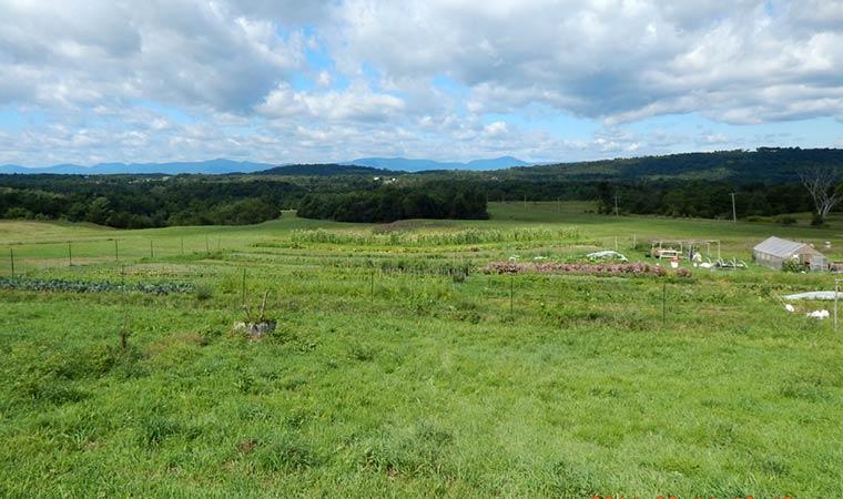 Wyda Farm Property